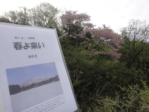 haruyokoi1.JPG