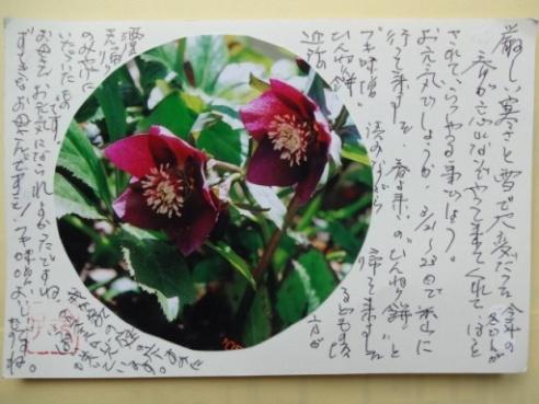 hagaki130329.JPG