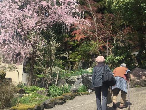 kashiwazaki180417.JPG