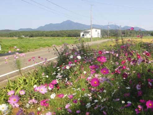 kosumosu1010072.JPG