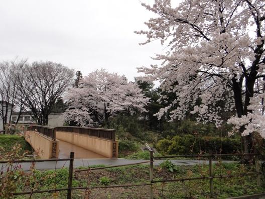 kosyouninnbashi100414.JPG