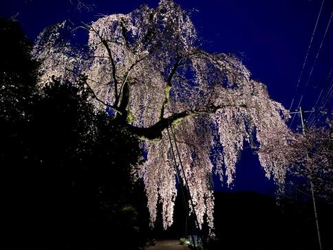 sakura20040201.JPG