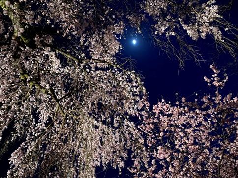 sakura20040202.JPG
