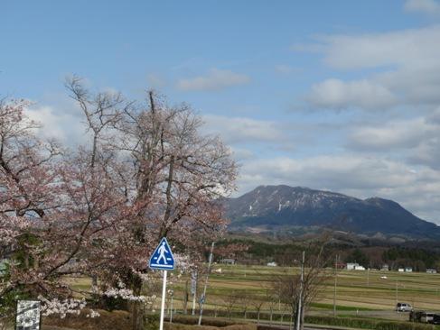 sakuraokami180413.JPG