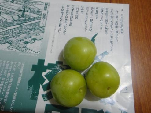 sumomo110703.JPG
