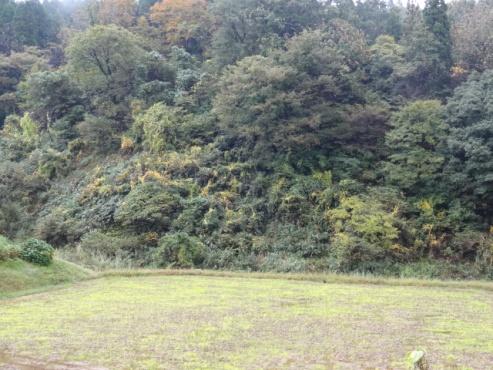 yamaimo131026.JPG