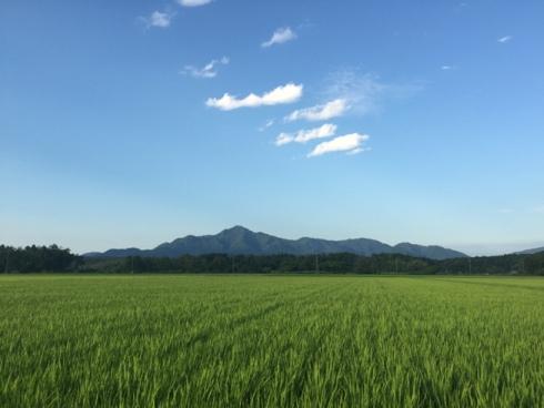 yoneyama1507202.JPG