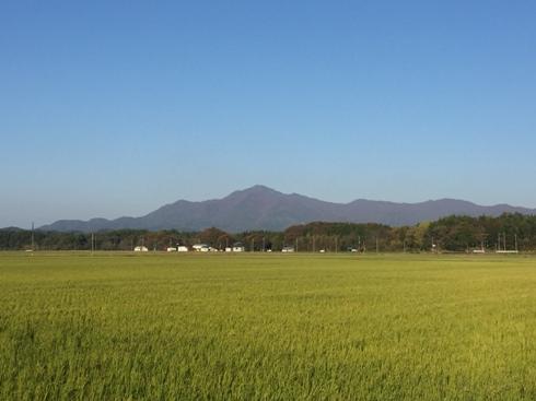 yoneyama161105.JPG