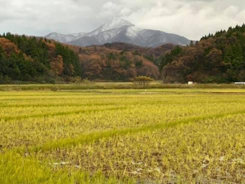 yoneyama191130.jpg