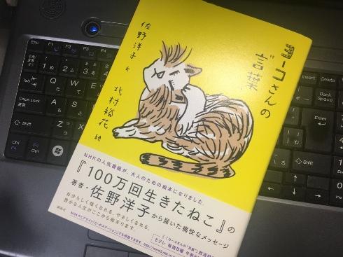 youko171029.JPG