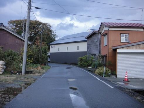 yoyogiku121103.JPG